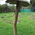 Giant mushroom 2 - wood sculpture & garden art
