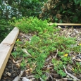 Green roof shed planted with vegetation bedding in