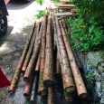 Raw timber from tree removals