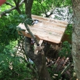 Second tree house platform