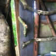 Tree house door
