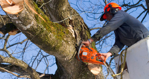 Tree surgery services in Brighton